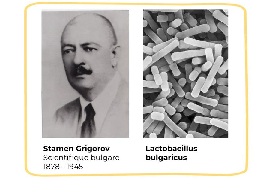 S.Grigorov et Lactobacillus bulgaricus