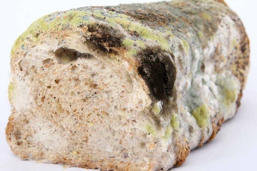 du pain moisi et contaminé