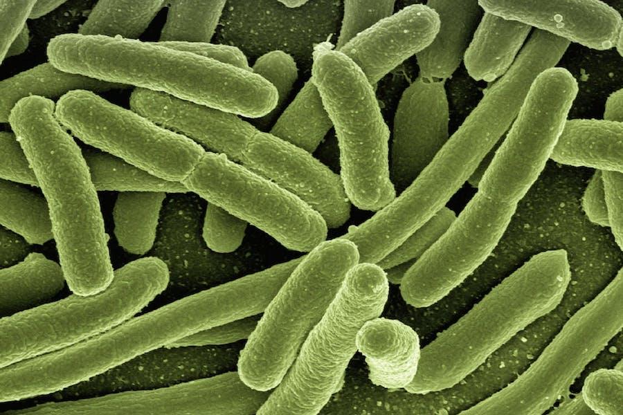 les probiotiques bacteries essentielles de la digestion