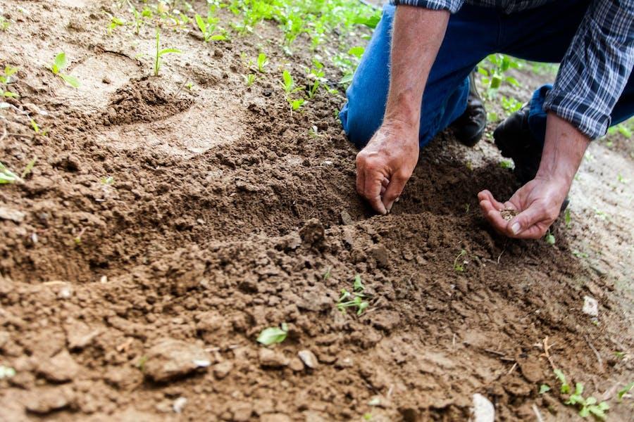 L'alimentation durable par une agriculture manuelle