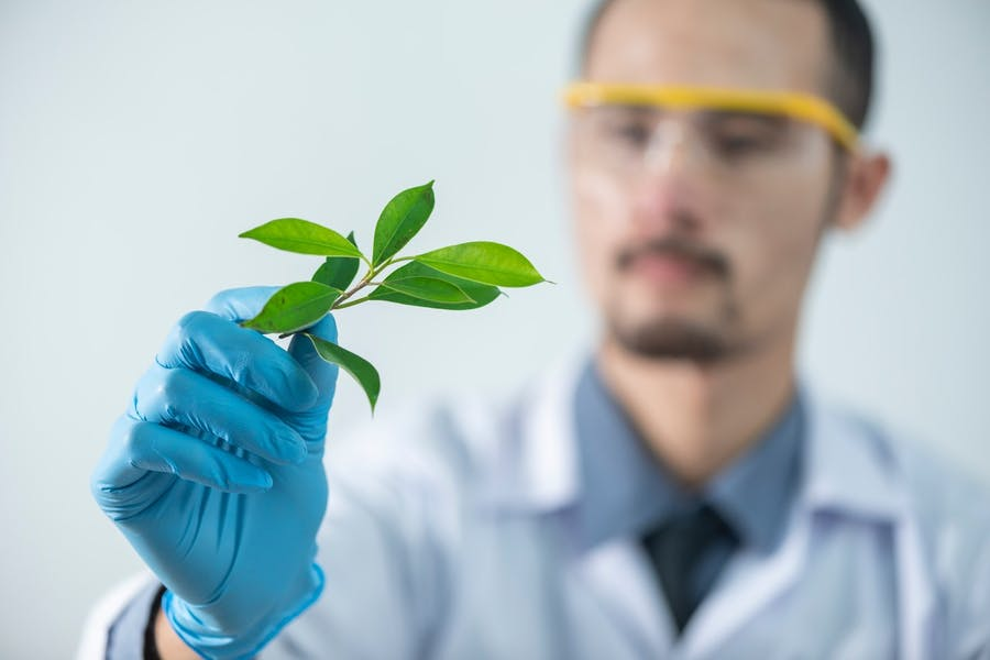 un scientifique examinant un produit agricole