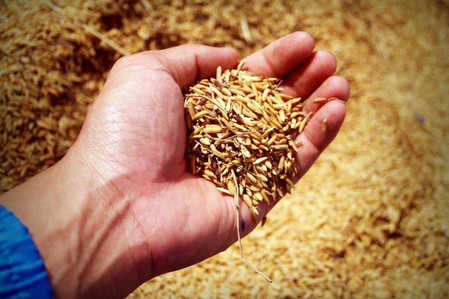 Les céréales, un des piliers de l'agriculture française