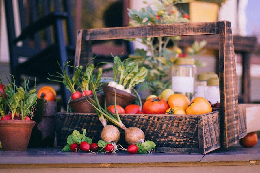 le végétal : piste pour une bonne transition alimentaire
